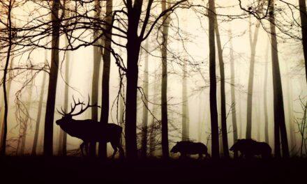 Styrk helbredet i danske nationalparker