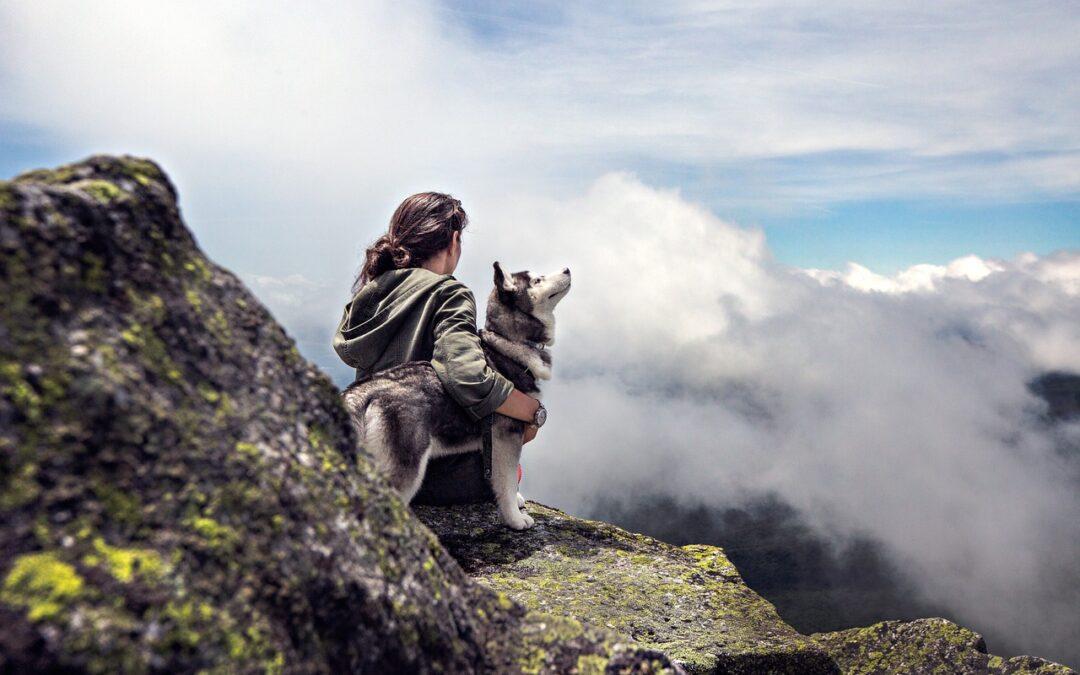 Sådan kombinerer du dit arbejdsliv med at have hund